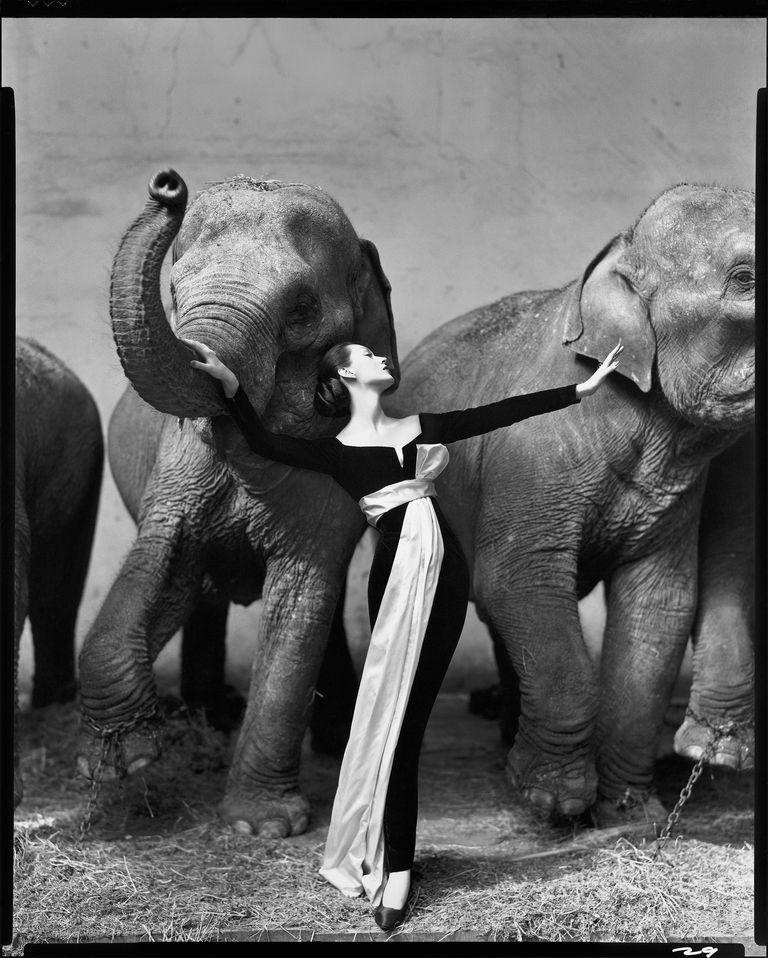 Richard Avedon Dovima e gli elefanti 1955 abito da sera Dior